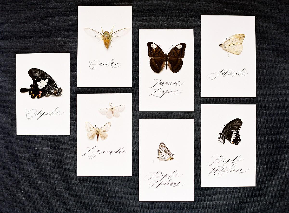 Papillon : A Chateau Dream