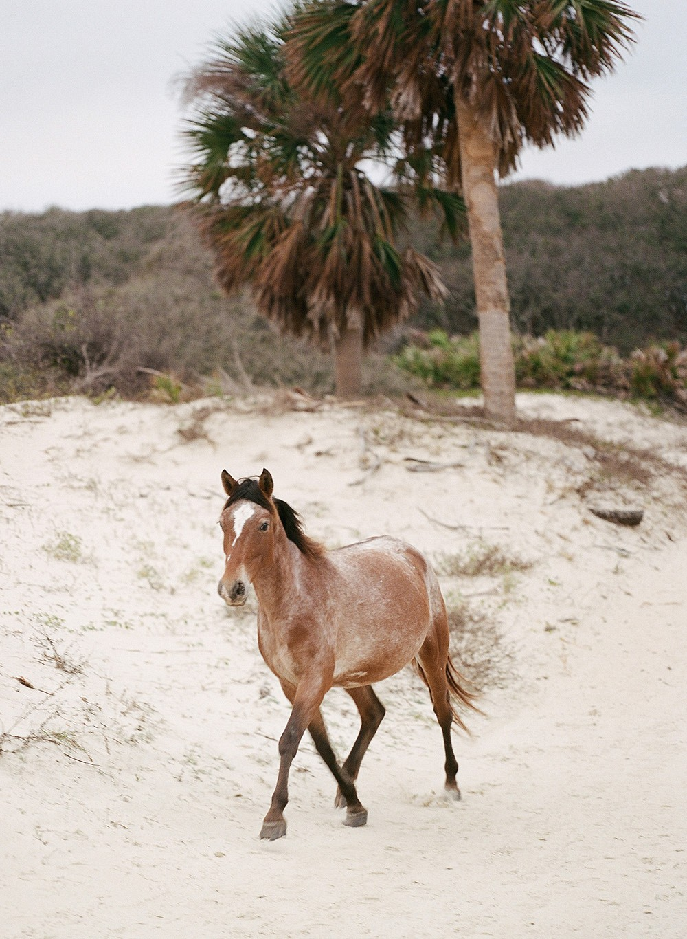 Elegant Beach Editorial on Cumberland Island