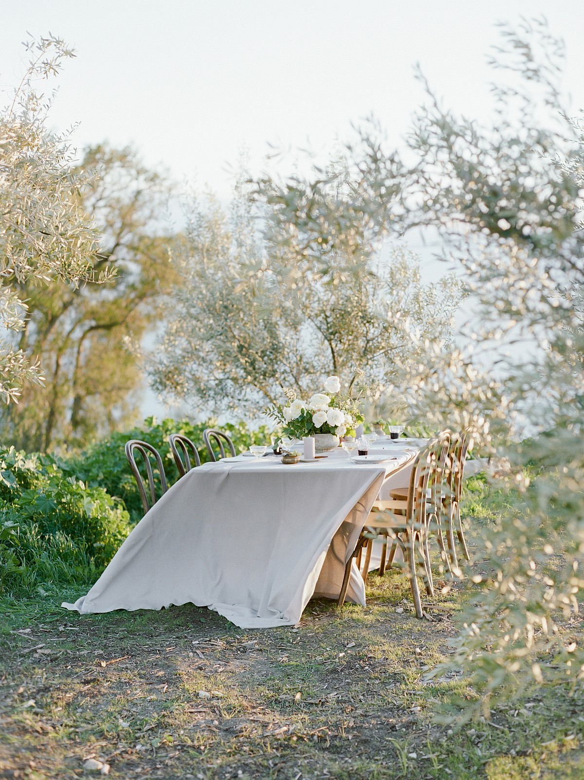 How To Host Your Wedding in an Olive Grove!