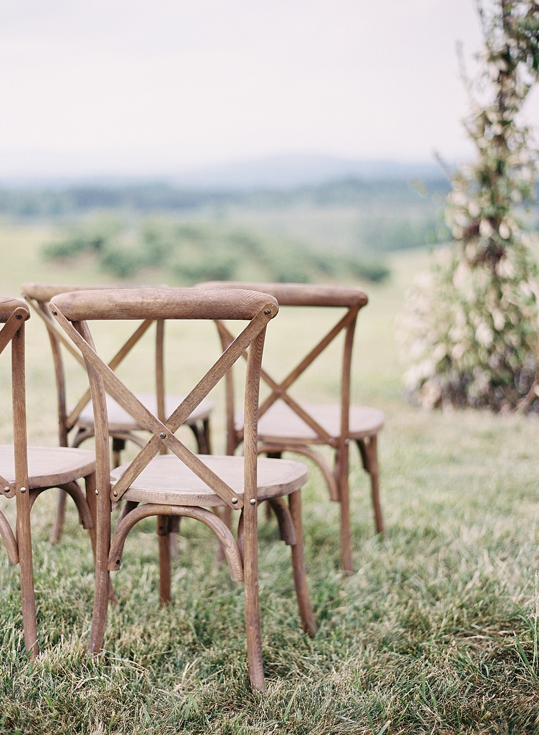 Vineyard Wedding with a Vine Covered Arbor